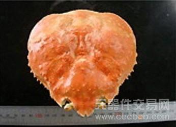 日本新技术可用螃蟹壳制造液晶面板